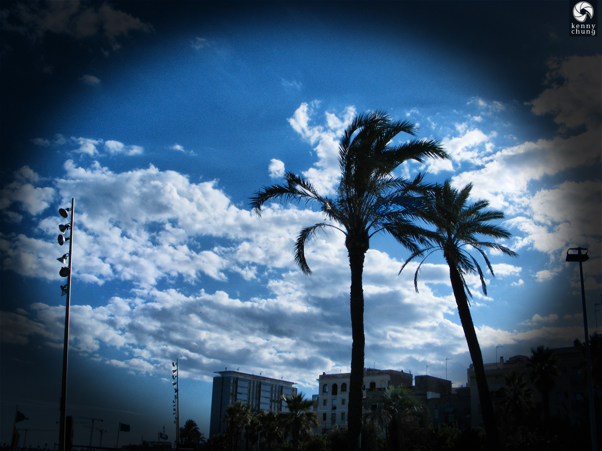 Palm Trees at La Barceloneta Beach