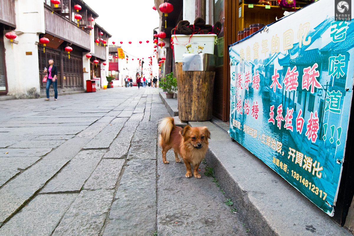 Puppy at Suzhou Canal