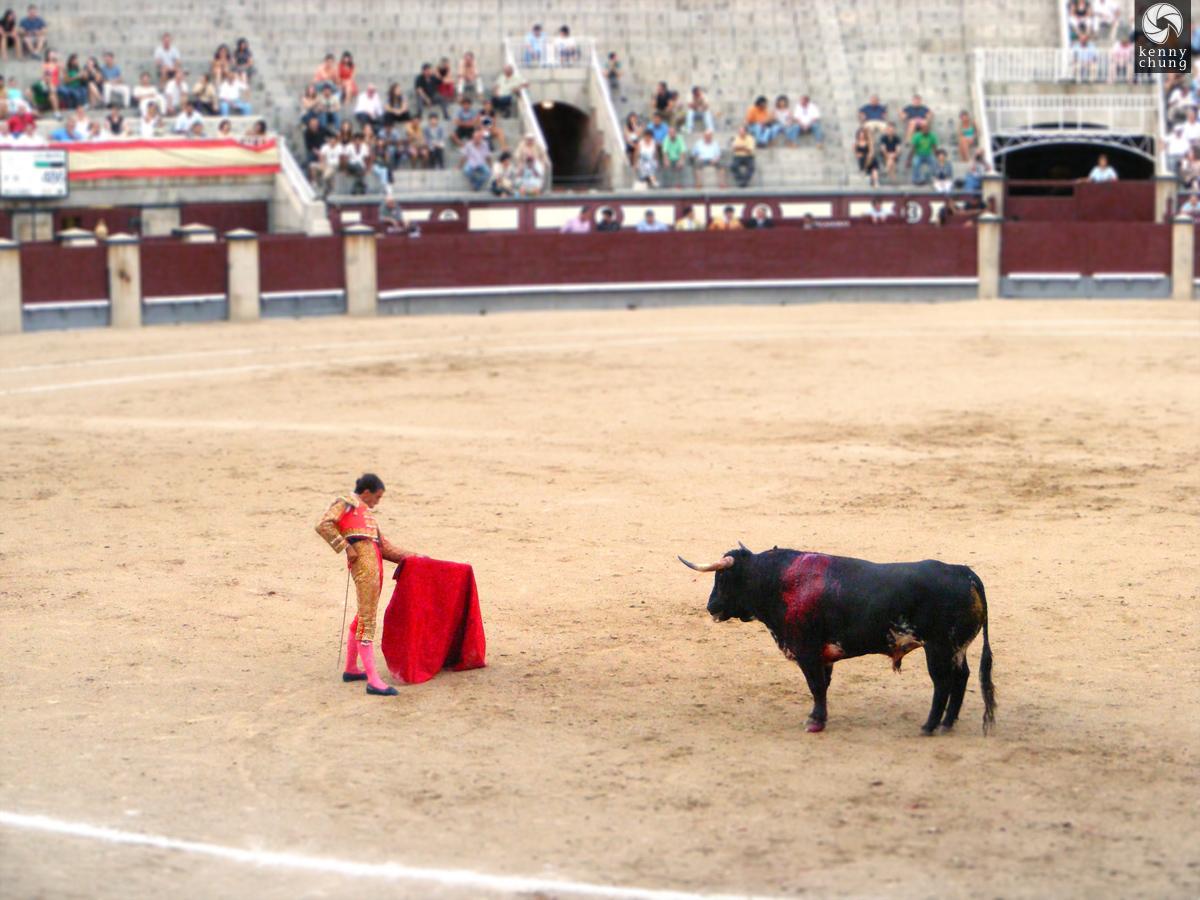 A bloody bull vs. the Matador