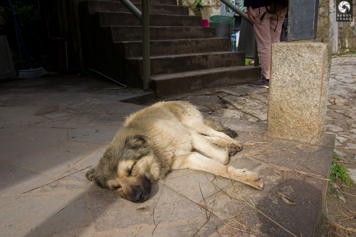 A sleeping dog at Machupicchu Village.