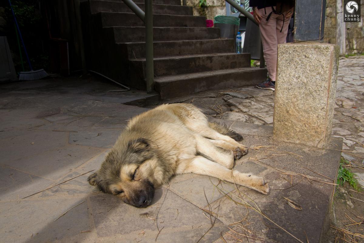 A sleeping dog at Machupicchu Village.