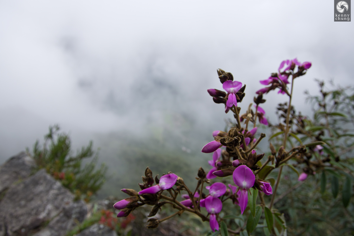 Purple flowers on the way up Huayna Picchu