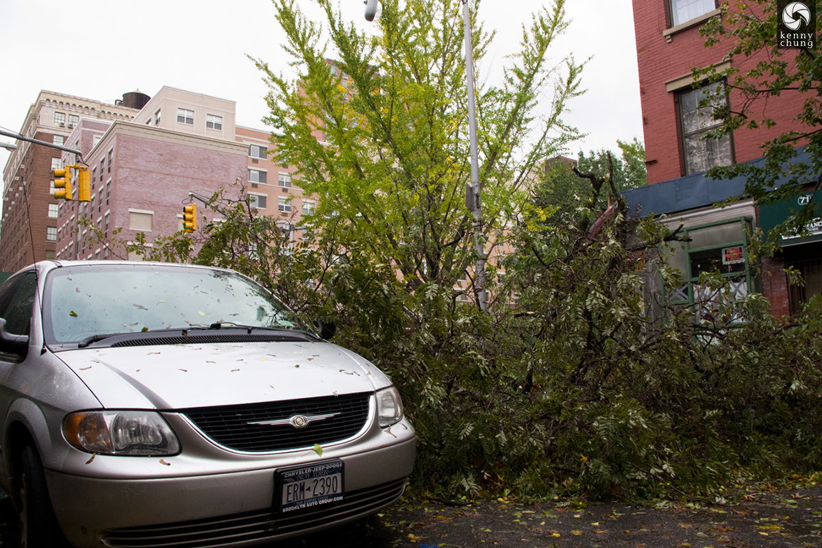 Trees knocked down by Hurricane Sandy